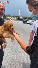 Cute Puppy Surprise for Girlfriend (2021)