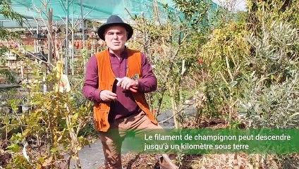 Comment planter un arbre en permaculture ?  (Vidéo)