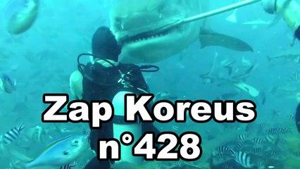 Zap Koreus n°428