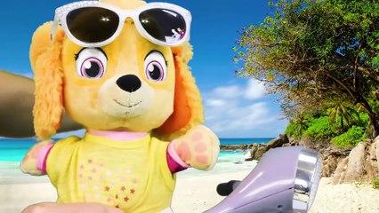 Paw Patrol ¡Ve a nadar en un día caluroso y aprende sobre el dinero y la responsabilidad
