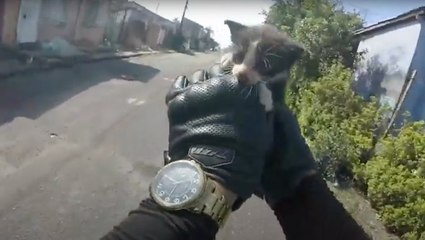 Motorcyclist Rescues Precious Kitten From Road