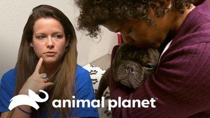 Cãozinho acaba ingerindo um brinquedo de pelúcia | Veterinário das Montanhas | Animal Planet Brasil