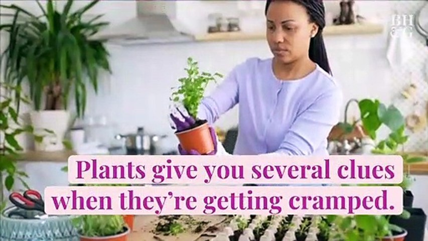 3 Easy Steps for Repotting Your Houseplants When They Outgrow Their Containers