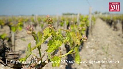 Des vins puissants et raffinés à Saint-Julien en 2020