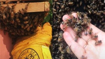 Beekeeping TikTok Is Trending