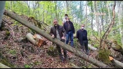 CHP'li Adıgüzel: Ordu'da işaretsiz ağaçları kesiyorlar