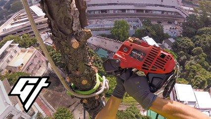 Unusual Jobs: Being a Tree Surgeon Protecting Hong Kong's Forests
