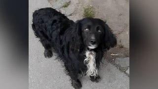 Abandonné dans une station-service, ce chien attend ses propriétaires pendant 3 semaines au même endroit….