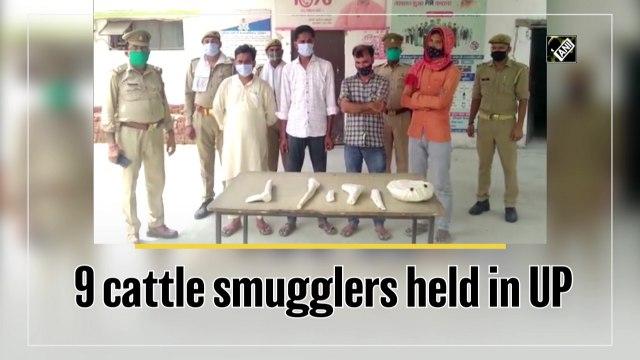 9 cattle smugglers held in Uttar Pradesh