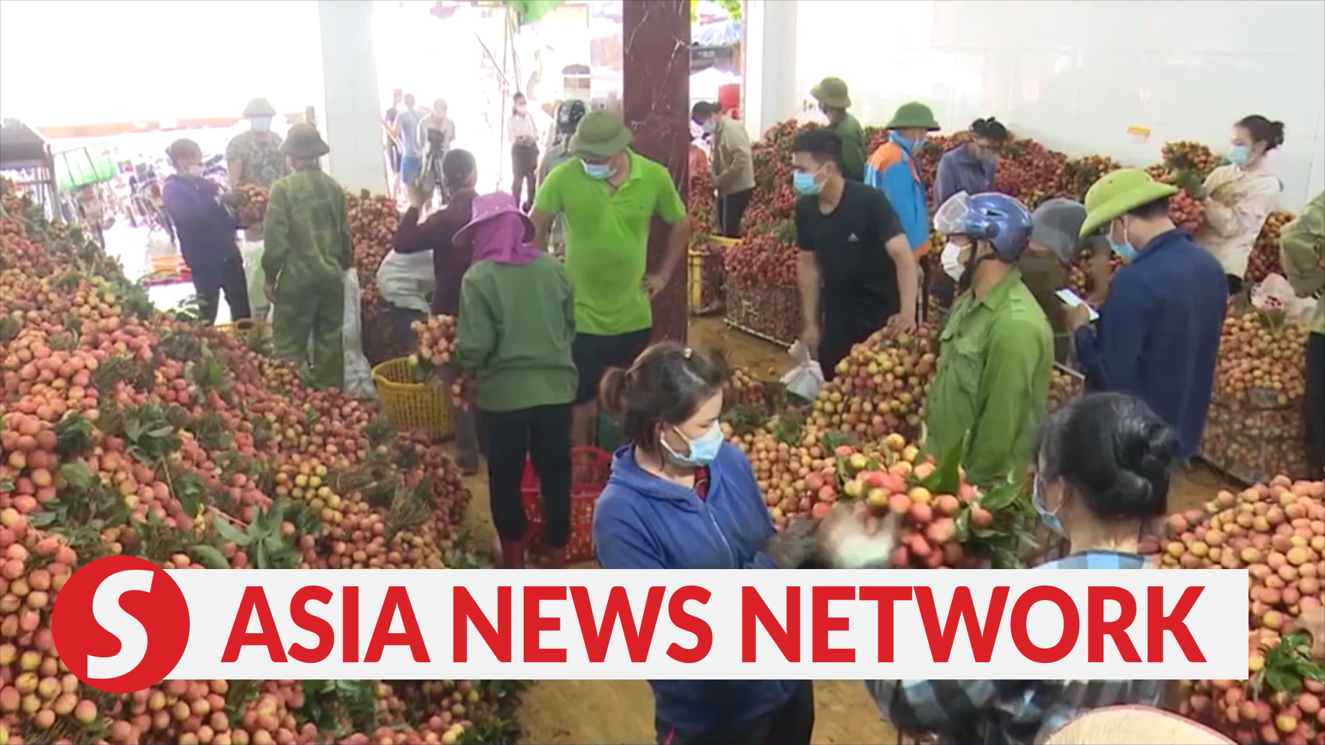 Vietnam News | Lychee farmers, traders vaccinated against Covid-19