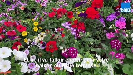 Roland Motte, jardinier : choisir vos fleurs annuelles pour terrasses et balcons