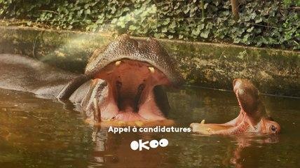Okoo- Appel à candidature- Une saison au zoo