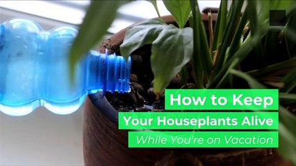 How to Keep Your Houseplants Alive While You're on Vacation