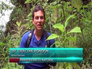 Travesía en lo Natural 12JUN2021 | Árbol de Mucuteno para prevenir enfermedades gastrointestinales
