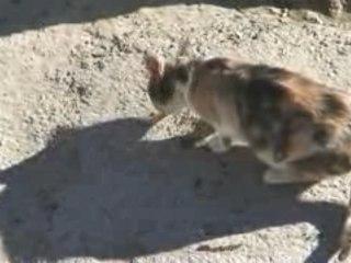 Oran - Les chats on la belle vie en Algerie