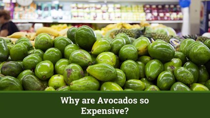 Why Avocados Are So Expensive