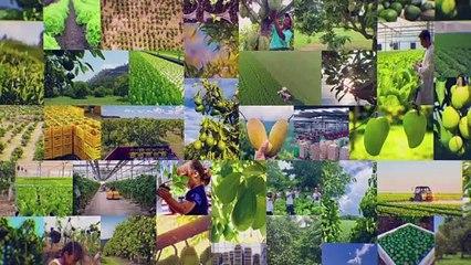 Mango Development Thailand Mar 21