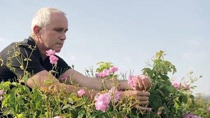 L'air d'ici - Épisode 6 - Fabrice Bianchi-Mul, producteur de plantes à parfum