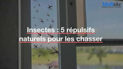 Insectes : 5 répulsifs naturels pour les chasser