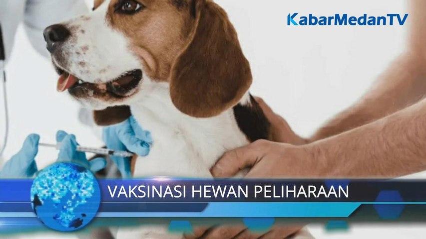 Bocah 10 Tahun Meninggal Digigit Anjing, Kelurahan Akan Gencarkan Vaksinasi Rabies