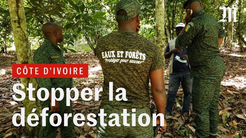 Il faut sauver la forêt ivoirienne !