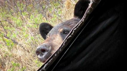 Hunter tiene un encuentro cercano con un oso curioso