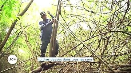 La Réunion - Un festin de guêpes