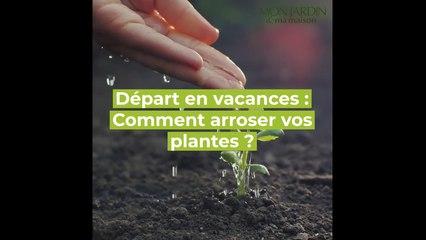DIY - Comment arroser vos plantes pendant vos vacances ?