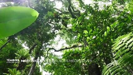 Martinique - Les balades méditatives