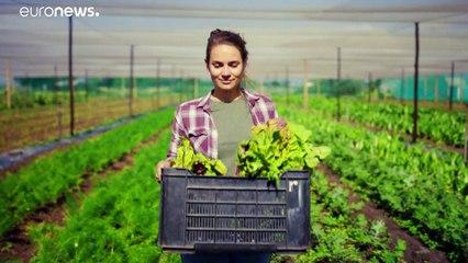 Des microalgues à haut potentiel alimentaire durable