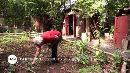La Réunion - Les fruits et légumes lontan