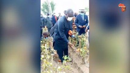 Le ministre Adjoumani en pleine récolte de tomate au Centre de formation agricole de Raviart