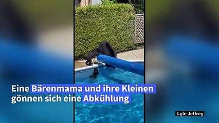 Kanadische Bärenfamilie sucht Abkühlung in Pool