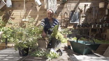 Plantes sans arrosage : quelles variétés choisir pour une jardinière ?
