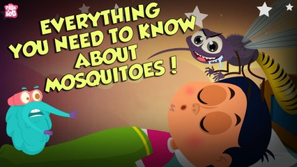 Everything About Mosquitoes   Zika Virus   The Dr Binocs Show   Peekaboo Kidz