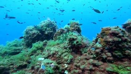 Plongez 3 minutes dans la méditerranée au Cap d'Antibes