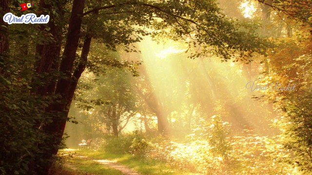 Beautiful Nature Relax Music for Sleep   Relaxing music with Nature Sounds   Soothing, Calm Music