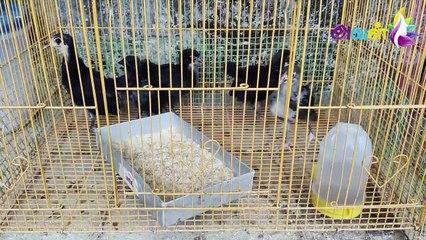 செல்லப்பிராணிகள் வளர்ப்பில் ஆயிரக்கணக்கில் வருமானம் - அசத்தும் ஹேமா