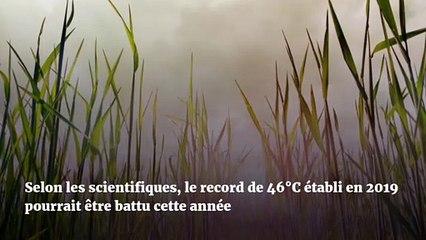 La température en France pourrait dépasser 50°C