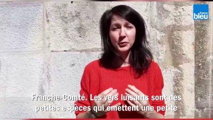 Enquête participative sur les vers luisants en Bourgogne-Franche-Comté