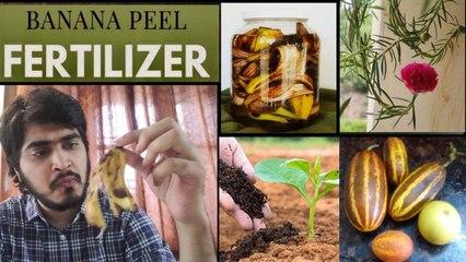 How To Use Banana Peels For Gardens | Organic Plant Fertilizer || Boldsky Telugu