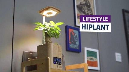 [CH]Hiplant