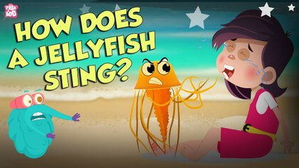 How Does A Jellyfish Sting?   Everything About Jellyfish   Dr Binocs Show   Peekaboo Kidz