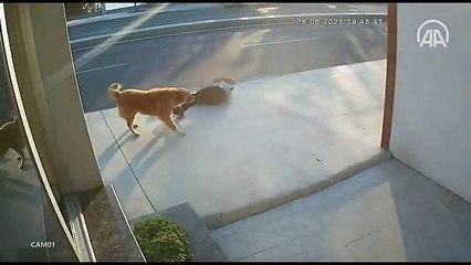 Un piéton percuté par un camion à cause d'un chien