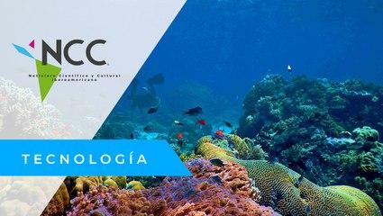 """""""Panel del Océano"""", el pacto por la sostenibilidad de los mares"""