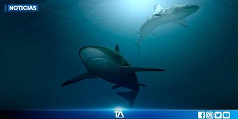 Los tiburones se encargan de mantener saludables a los ecosistemas marinos