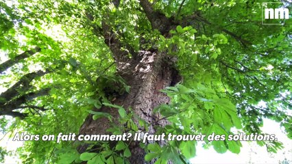 Planter des arbres pour réduire notre empreinte carbone
