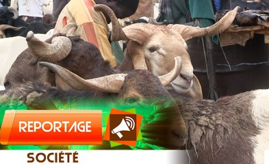 TABASKI 2021 : Les raisons de la flambée des prix du bétail