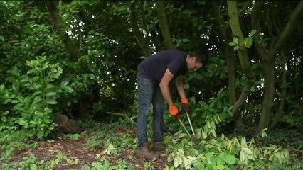 Santé - Accidents de jardinage : protégez vos mains
