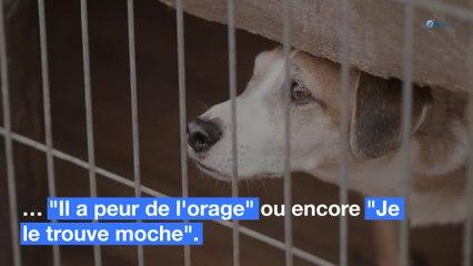 Abandon de son animal : les pires excuses entendues à la SPA